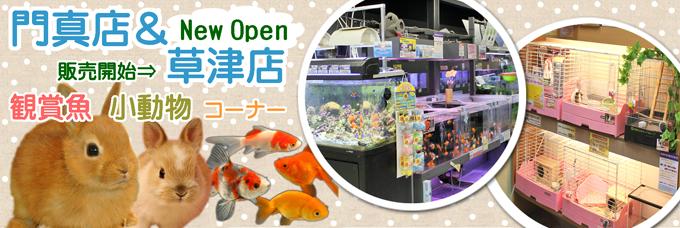 門真店 観賞魚・小動物コーナー