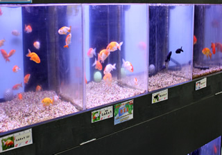 魚飼育用品